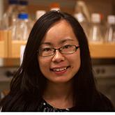 Wenli Dai, PhD Photo