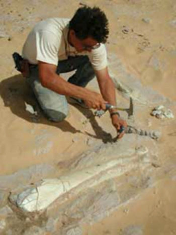 Paul works on an articulated Ouranosaurus hind limb