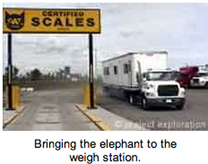 Weigh station for elephant