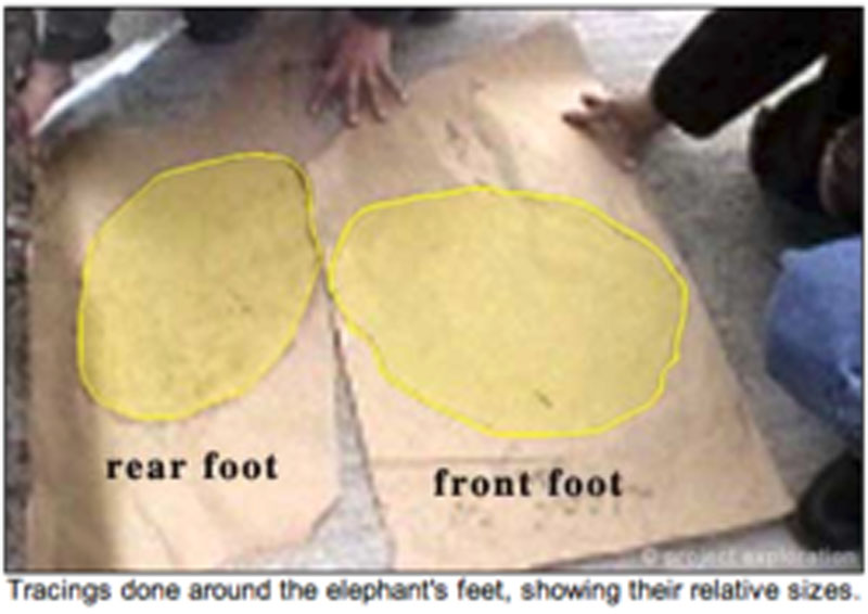 Tracing done around the elephant feet