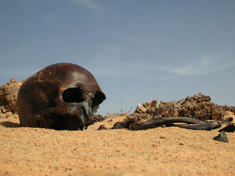 Brown Skull; credit, M. Hettwer