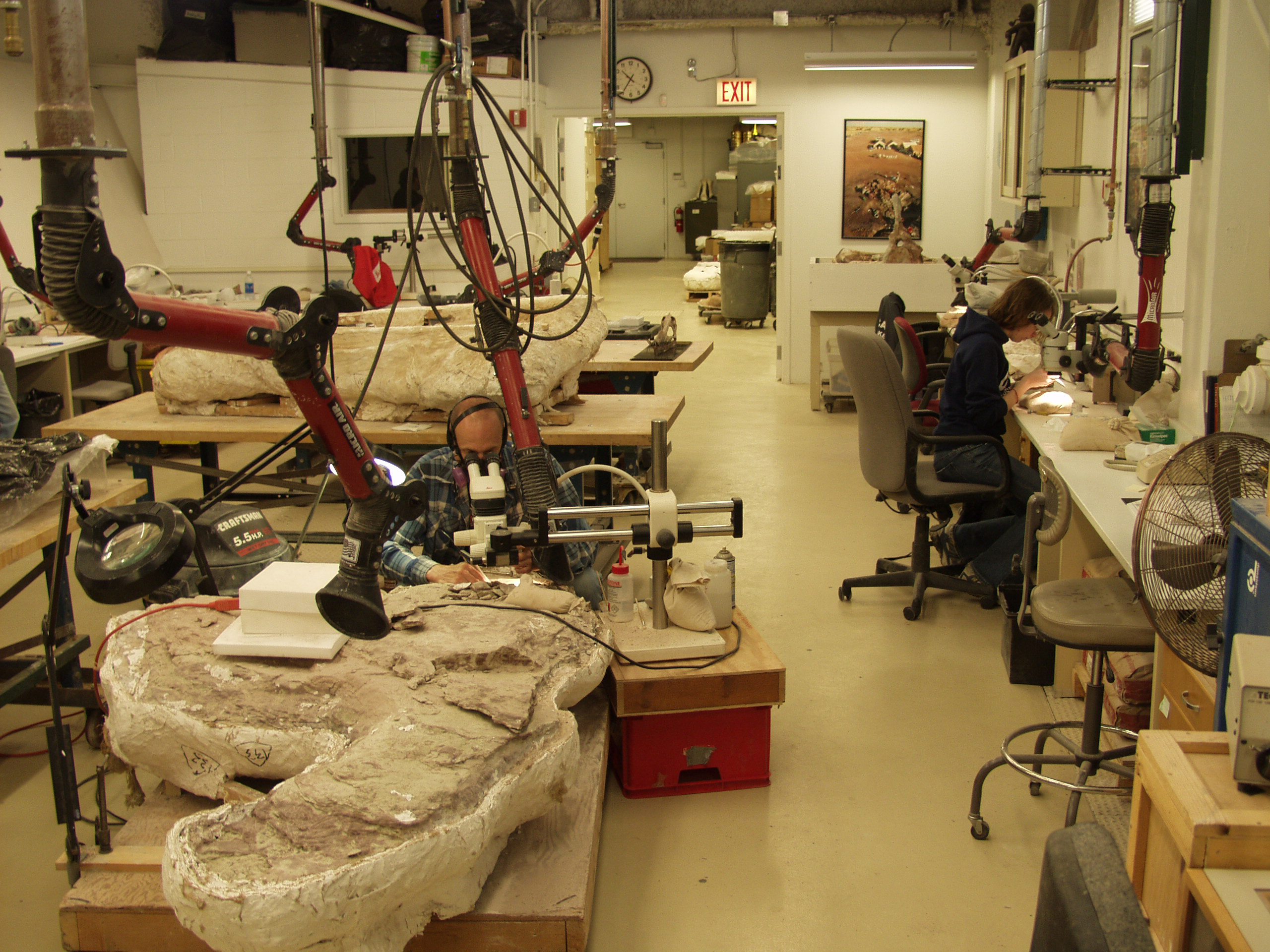 fossil lab gallery