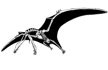 The African Pterosaur