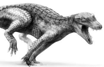 Araripesuchus wegeneri