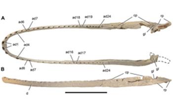 Laganosuchus thaumastos