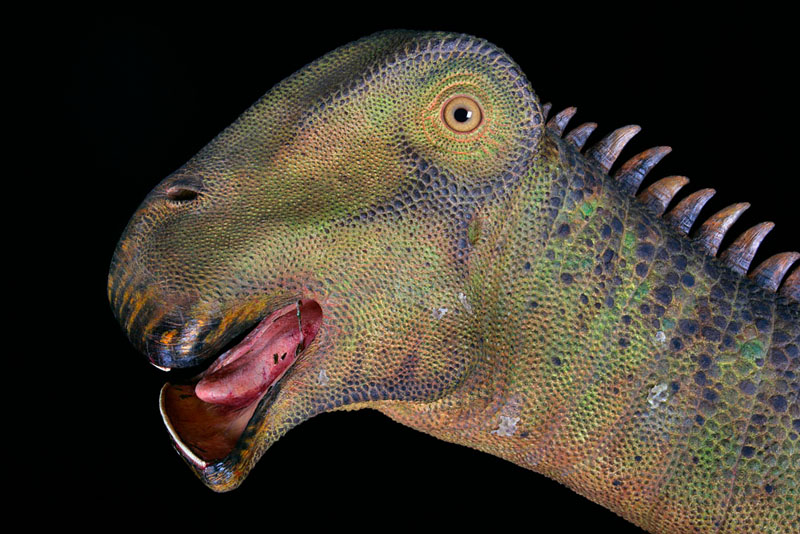 Dinosaur Jr.* Dinosaur Jr - Get Me
