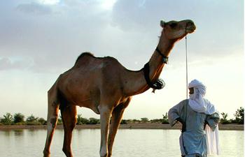 Niger 2000