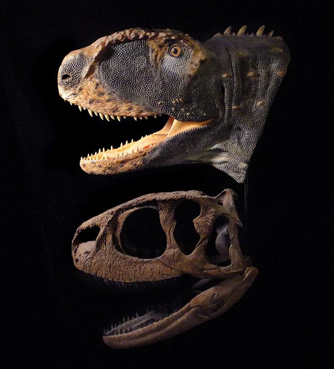 Animals for Kids: Velociraptor Dinosaur |Velociraptor Skull Front