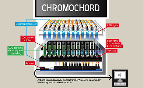 Chromochord illustration