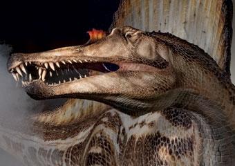 Flesh model of Spinosaurus