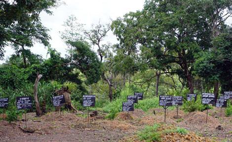 Ebola graves