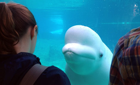 UChicago students with beluga whale