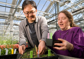 Jean Greenberg, associate professor of molecular genetics and cell biology, and Ho Won Jung, post-doctoral scholar in molecular genetics and cell biology at the University of Chicago, examine plants used in an experiment that discovered crucial steps in