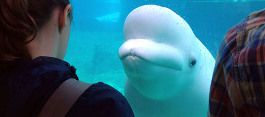 students with a Beluga whale.